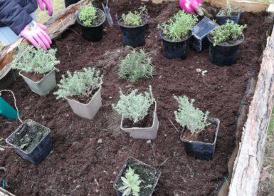 plantations-de-printemps